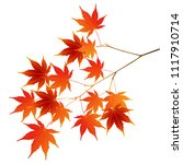 Autumn Leaves Autumn Leaves Icon
