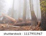 old forest in dense fog ...   Shutterstock . vector #1117951967