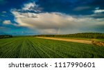 biogas plant and corn field... | Shutterstock . vector #1117990601