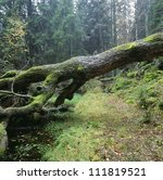 Moss Growing On Fallen Tree In...
