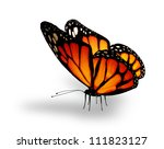 Stock photo orange butterfly isolated on white 111823127