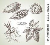 hand drawn sketch cocoa... | Shutterstock .eps vector #1118240321
