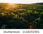 soy field at sunset   Shutterstock . vector #1118252501