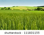 Wheat Field And Countryside...