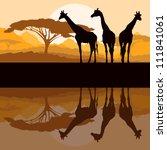 Giraffe Family Silhouettes In...