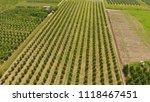 young trees cherry garden.... | Shutterstock . vector #1118467451