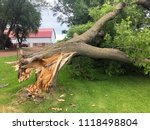 Storm Damaged Downed Ash Tree...