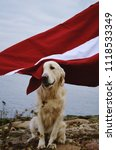 Small photo of Happy Golden Retriever sitting next to River Daugava with waving flag of Latvia. 100th Birthday of Latvia.