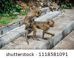 mating of monkeys in thailand. | Shutterstock . vector #1118581091