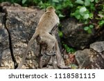 mating of monkeys in thailand. | Shutterstock . vector #1118581115
