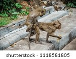 mating of monkeys in thailand. | Shutterstock . vector #1118581805