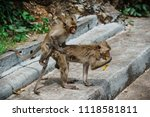 mating of monkeys in thailand. | Shutterstock . vector #1118581811