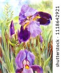 watercolor purple irises.... | Shutterstock . vector #1118642921