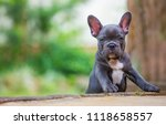 a portrait of a young french... | Shutterstock . vector #1118658557