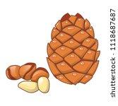 cedar nut icon. cartoon of... | Shutterstock .eps vector #1118687687