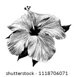 hibiscus flower close   up of a ...   Shutterstock .eps vector #1118706071