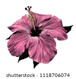 hibiscus flower close   up of a ... | Shutterstock .eps vector #1118706074