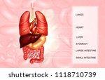 human internal organs on... | Shutterstock . vector #1118710739
