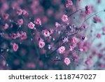 dry pink baby's breath flowers...   Shutterstock . vector #1118747027