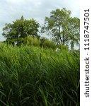 very high reed | Shutterstock . vector #1118747501