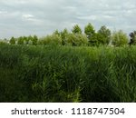 very high reed | Shutterstock . vector #1118747504