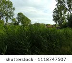 very high reed | Shutterstock . vector #1118747507