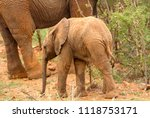 an elephant mother and her calf ... | Shutterstock . vector #1118753171