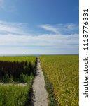 green rice fields | Shutterstock . vector #1118776331