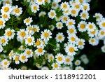 shallow focus view of an...   Shutterstock . vector #1118912201