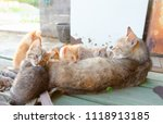 cat family from behind | Shutterstock . vector #1118913185