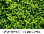 deep green grass foliage | Shutterstock . vector #1118933981