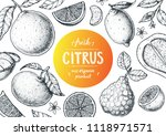 citrus sketch collection. hand... | Shutterstock .eps vector #1118971571