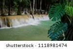 tropical foliage monstera... | Shutterstock . vector #1118981474