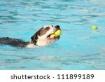 a mixed breed dog at a public pool - stock photo