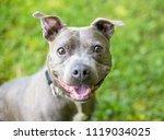a cute staffordshire bull... | Shutterstock . vector #1119034025