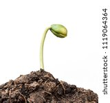 small plant seedling isolated... | Shutterstock . vector #1119064364
