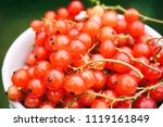 fresh red currant in a white cup | Shutterstock . vector #1119161849
