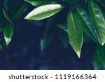 leaves background. defocused... | Shutterstock . vector #1119166364