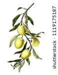 olive branch illustration...   Shutterstock . vector #1119175187