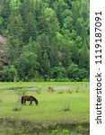 pasture and horses in the valley | Shutterstock . vector #1119187091
