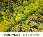aerial view of mixed forest.... | Shutterstock . vector #1119192941