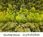 aerial view of mixed forest.... | Shutterstock . vector #1119192944