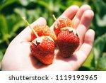 strawberries on a hand closeup | Shutterstock . vector #1119192965