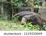 anteater in forest | Shutterstock . vector #1119253049