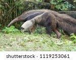 anteater in forest | Shutterstock . vector #1119253061