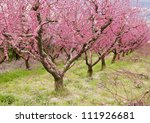 Pink Trees In Bloom
