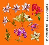 lilies and phloxes. a set of... | Shutterstock .eps vector #1119295061