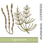colored equisetum in hand drawn ... | Shutterstock .eps vector #1119330101