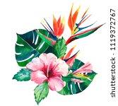 bright green herbal tropical... | Shutterstock . vector #1119372767