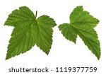 currant leaf isolated on white... | Shutterstock . vector #1119377759